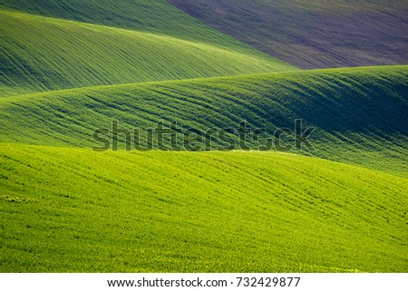 Rolling hills of green wheat fields. Amazing fairy minimalistic landscape with waves hills, rolling hills. Abstract nature background. South Moravia, Czech Republic #732429877