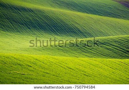 Rolling hills of green wheat fields. Amazing fairy minimalistic landscape with waves hills, rolling hills. Abstract nature background. South Moravia, Czech Republic #750794584
