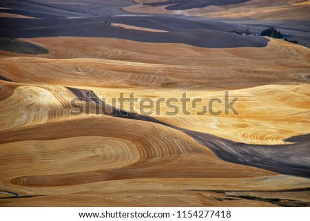Rolling hills of wheat in the autumn and fall in the Palouse region of Washington State #1154277418