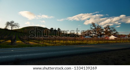Rolling hills with vineyards, houses, large oak tree, and white clouds with blue sky, Windsor, California.                            #1334139269