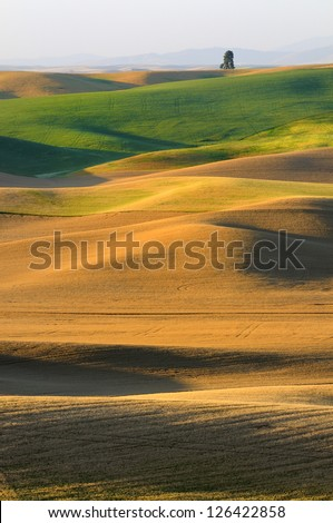 Rolling Landscape and Lone Tree