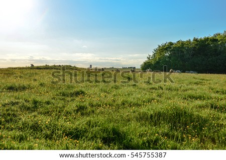 Rolling pastures of the English countryside in summer with cows in the horizon against a beautiful blue sky #545755387