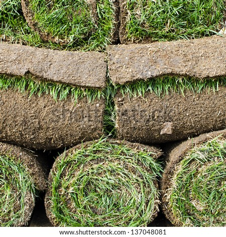 Rolls of fresh grass turf.