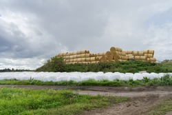 Rolls of hay and silage.Type of fodder made from green foliage crops preserved by acidification, achieved through fermentation.  Food reserve for ruminants. Rural landscape in Estonia.