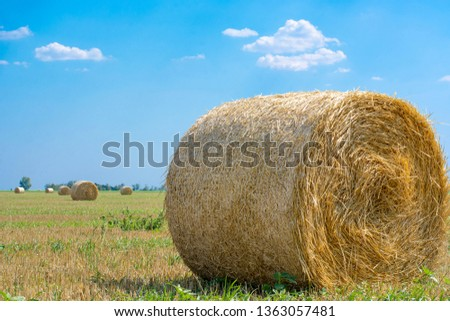 Rolls of hay on the field after the harvest of wheat, rye against the background of blue sky with clouds, summer day. Space for text. Copy space. #1363057481