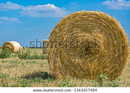 Rolls of hay on the field after the harvest of wheat, rye against the background of blue sky with clouds, summer day. Space for text. Copy space. #1363057484