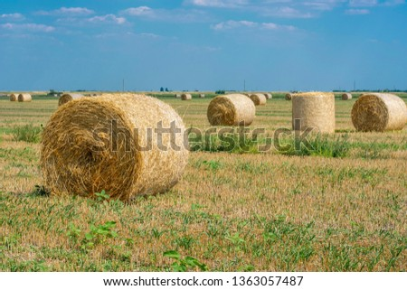 Rolls of hay on the field after the harvest of wheat, rye against the background of blue sky with clouds, summer day. Space for text. Copy space. #1363057487