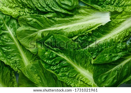 Romaine Lettuce leaves texture. Background of green salad leaves. Fresh salad greens texture. Organic concept backdrop. Photo stock ©