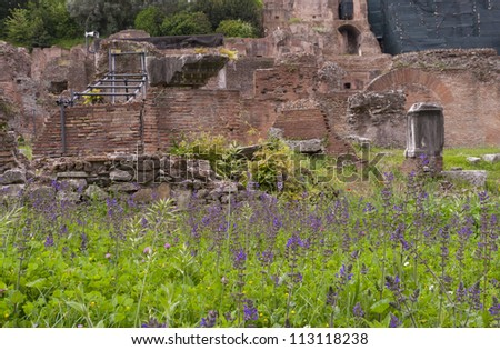 Roman Forum ruins with spring flowers.