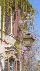 Roman lantern and blooming wisteria in vertical format