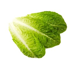 roman lettuce isolated on white background