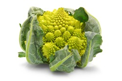 Romanesco broccoli cabbage (or Roman Cauliflower) isolated on white background