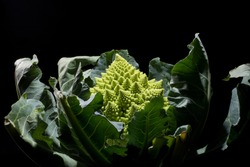 romanesco broccoli fractal on black background
