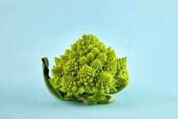 Romanesco broccoli or Roman cauliflower, a type of cauliflower. Isolated on a blue background.