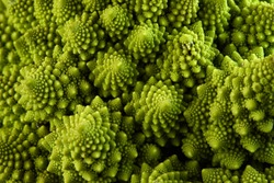Romanesco broccoli or Roman cauliflower, close up shot from above, texture detail of the healthy vegetable Brassica oleracea, a variation of cauliflower.  macro photo.