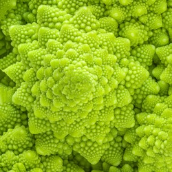 Romanesco broccoli or Roman cauliflower textured  background. Healthy  Vegan Food concept. Wallpaper