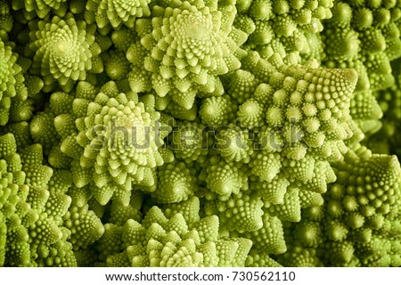 Romanesco broccoli vegetable represents a natural fractal pattern and is rich in vitimans. First documented in Italy originating from the Brassica oleracea family. Close up view of the fractal spirals