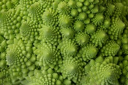Romanesco cabbage (Romanesque broccoli). Vegetarian food. Healthy lifestyle.