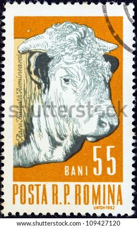 "ROMANIA - CIRCA 1962: A stamp printed in Romania from the ""Prime Farm Stock"" issue shows a bull, circa 1962."
