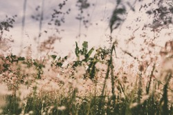 Romantic and poetic wild flower field background