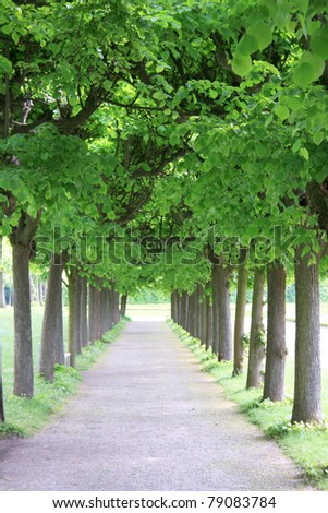 romantic avenue of trees in spring
