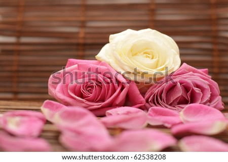 Romantic background with rose and rose petals - stock photo