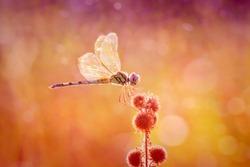 Romantic Beautiful Dragonfly