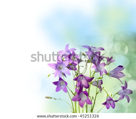 romantic blue bells flowers