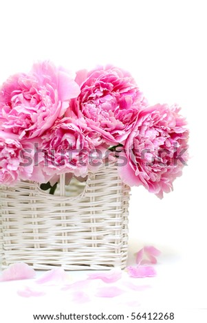 Romantic bouquet. Delicate pink peonies isolated on white background