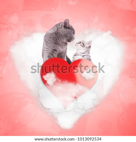romantic couple of cats on a...