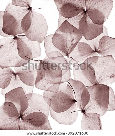 romantic flower petal close up