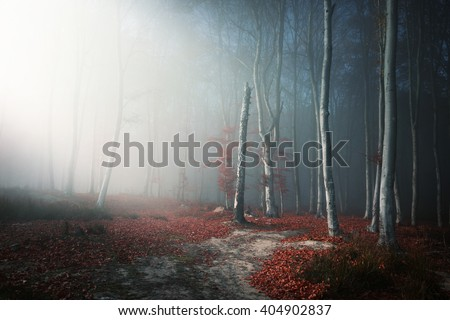 Romantic light through the fog shines on the trail in misty forest, during an autumn day