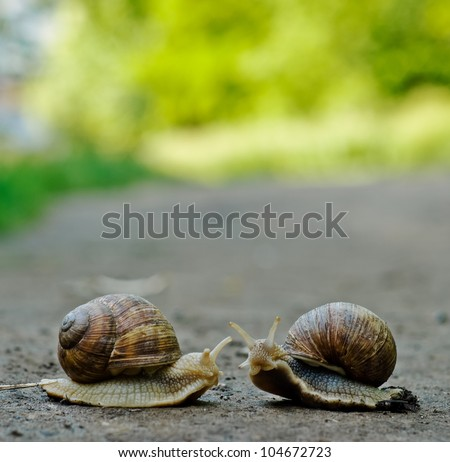 Stock Photo Romantic meet and kissing between of burgundy snail , Close-up outdoor