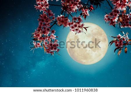 Romantic night scene - Beautiful cherry blossom (sakura flowers) in night skies with full moon.  - Retro style artwork with vintage color tone. Сток-фото ©