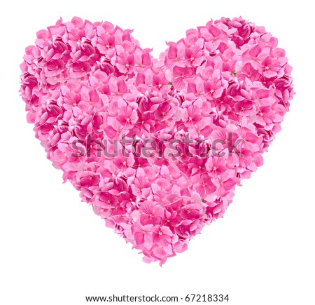 romantic pink heart constructed from pink hydrangea flower heads, isolated on white for valentine day or a romantic celebration