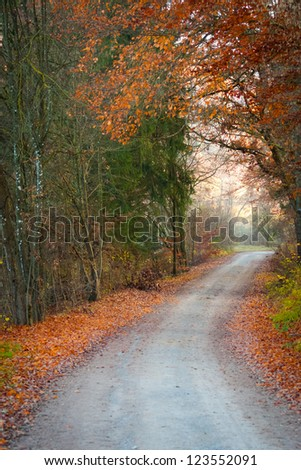 Romantic road through the autumn forest