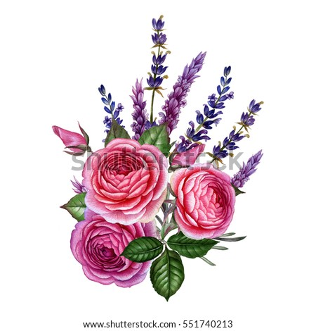Romantic Rose And Lavender Illustration Pink Rose Flowers With