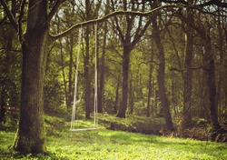 Romantic scene of a single swing hanging from tree branch