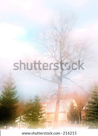 Romantic tree