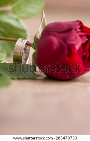 Romantic wedding band on a single fresh red rose symbolic of love with focus to the ring and copyspace in the foreground.