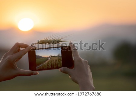 Fototapete Romantic woman walking and smartphone camera shooting in golden fields of barley. Photo of glad girl enjoying life in wheat field. Girl free on spring day. Joy life day in nature concept.