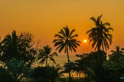 Romantic yellow sunset on a Caribbean beach full of tall palm trees