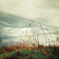 romantic yet melancholy windswept wild grasses