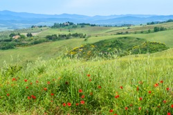 Roncolla, Volterra, Tuscany / Italy: Typical Tuscan countryside with poppies and rolling hills near Borgo di Roncolla outside Volterra (near The Ring of San Martino by Mauro Staccioli).