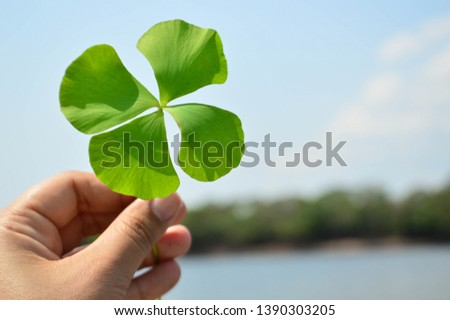 RONDONIA- Brazil, May 6, 2019. Four-leaf clover, found on the Guaporé River in the state of Rondonia. Border region with the country Bolivia. Region of vast diversity of both fauna and flora.  #1390303205
