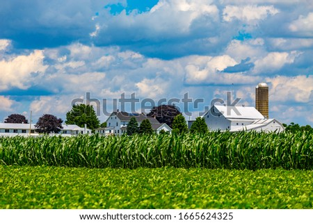 Ronks, PA / USA - June 27, 2017: Corn growing in a Lancaster County farmer's field is just weeks away from producing sweet corn. Foto stock ©