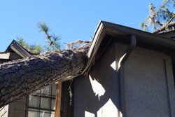Roof damage from tree that fell over during hurricane storm
