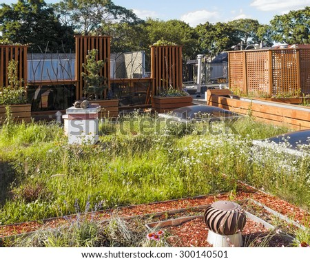 Rooftop garden in urban setting with beehive