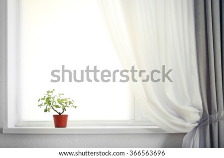 Room with curtain and window and plant on the windowsill