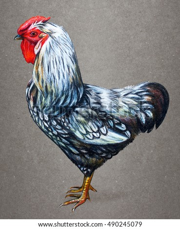 Rooster American drawing on vintage background